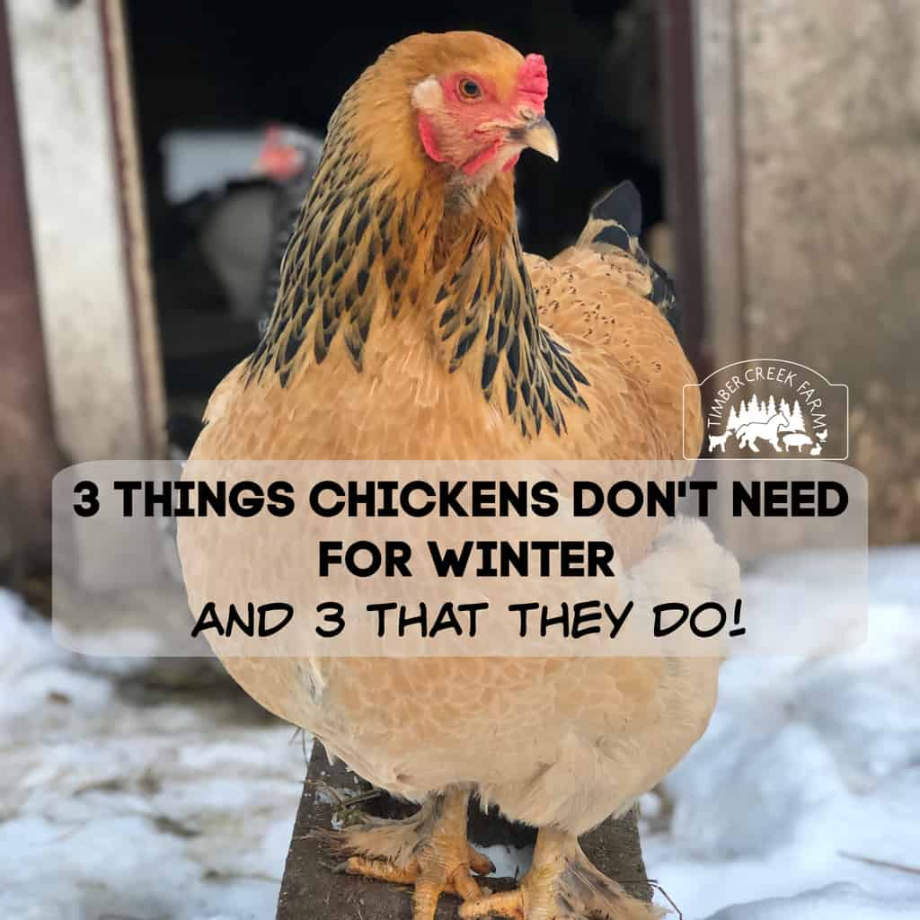 things chickens don't need
