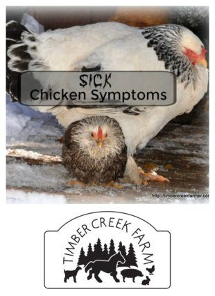 sick chicken symptoms