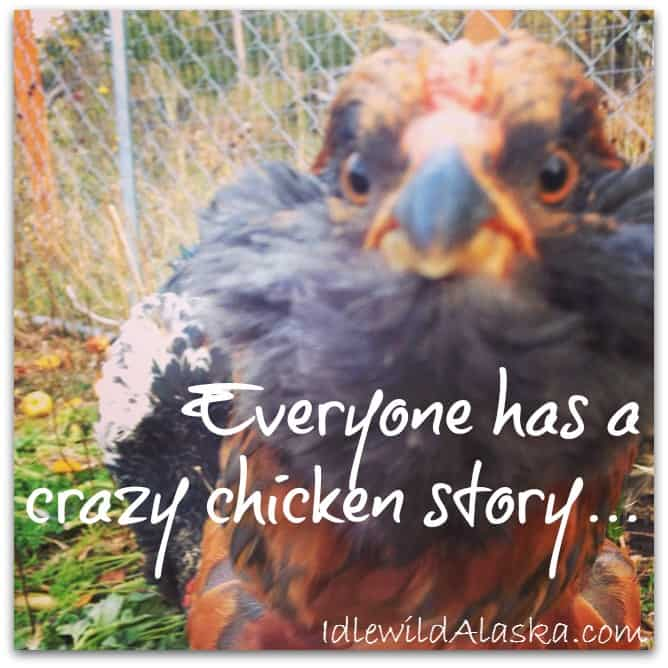funny chicken life moment
