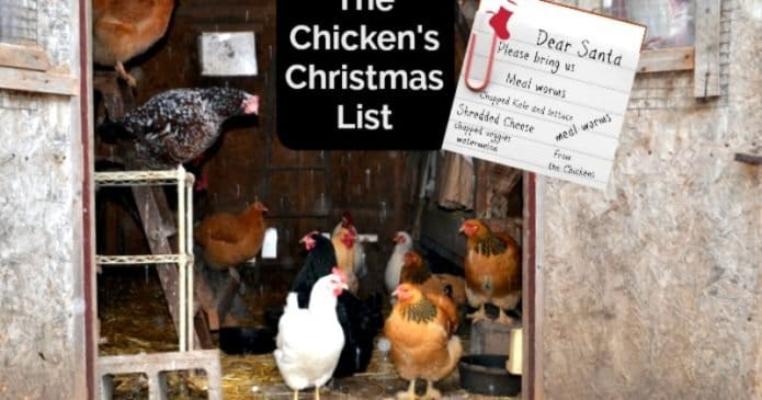 chicken's christmas list