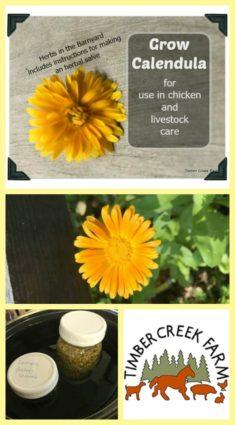 grow calendula