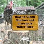How to Clean Chicken Water Tubs