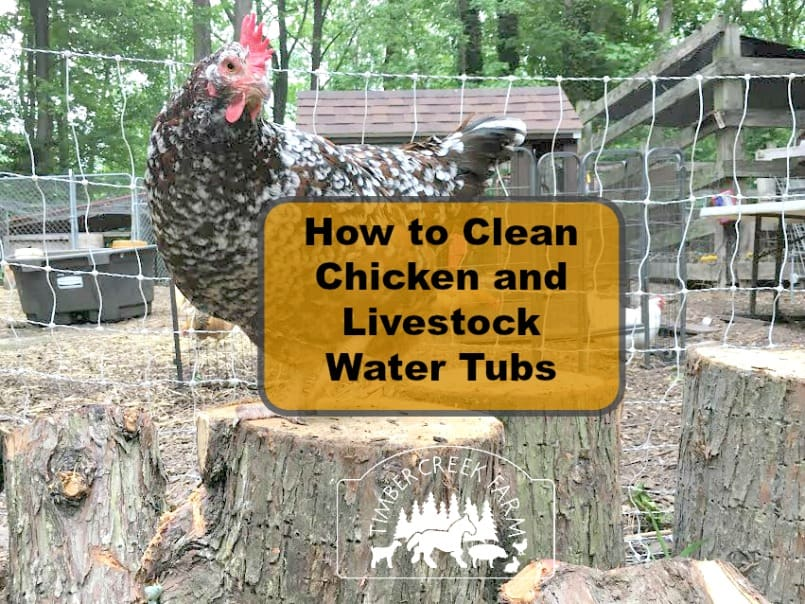 clean chicken water tubs