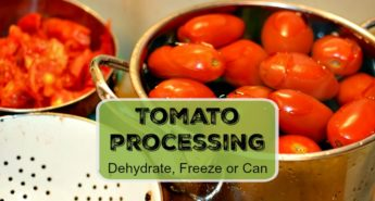 Tomato Processing – Canning Freezing Dehydrating