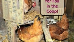 Fall chicken coop preparations