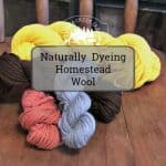 Naturally Dyeing Homestead Wool from Your Flock
