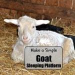 Build a Goat Sleeping Platform