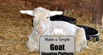 goat sleeping platform