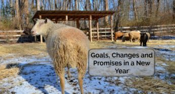 Goals and Changes of a Farmer/Writer