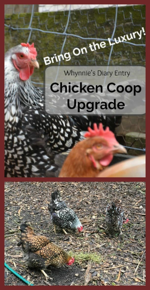 chicken coop upgrade