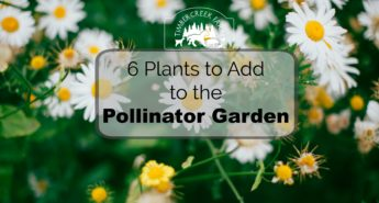 6 Plants to Add to the Pollinator Garden