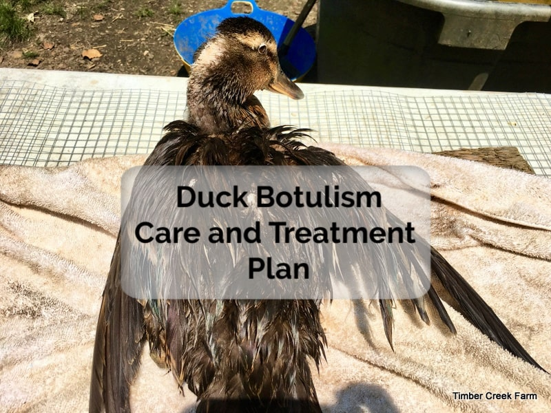 duck botulism treatment