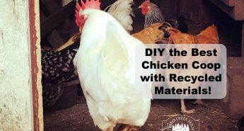 DIY the Best Chicken Coop with Recycled Materials