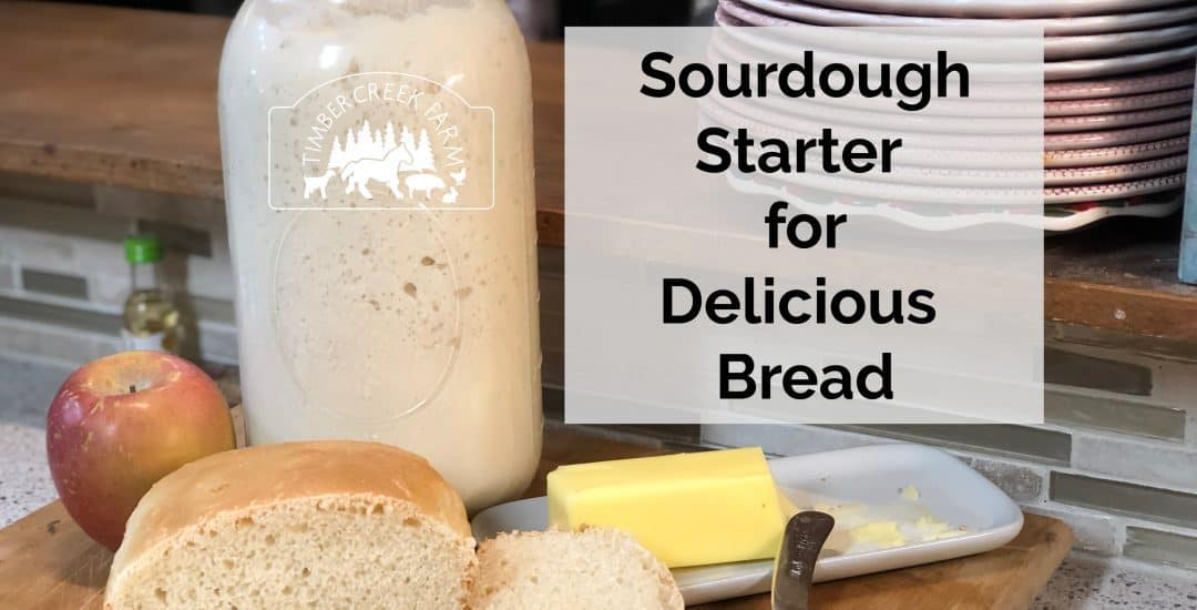 Sourdough Starter for French Bread