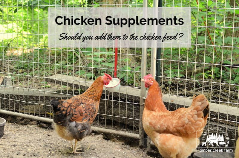 chicken supplements