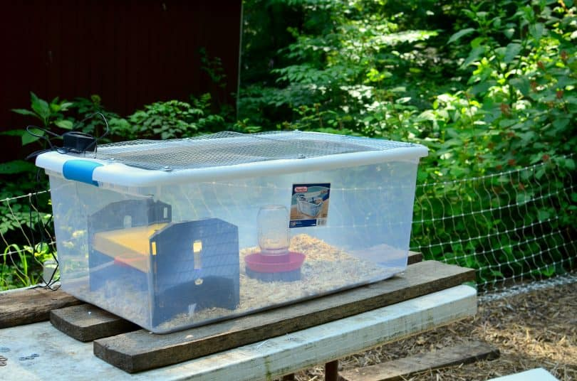 easy brooder ideas