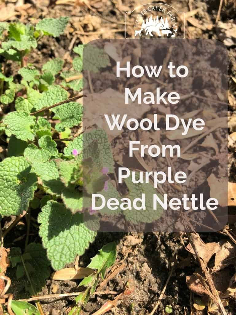 purple dead nettle dye