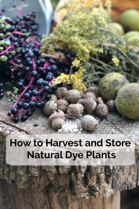 Fall is the perfect time to harvest natural dye plants and store for later use. While not all dye plants store well after being cut or gathered, quite a few will yield color just as well later, as they will fresh.