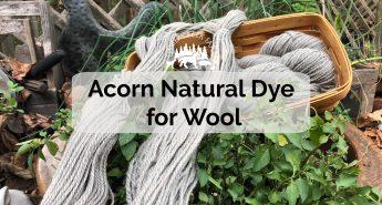 Acorn natural dye for wool