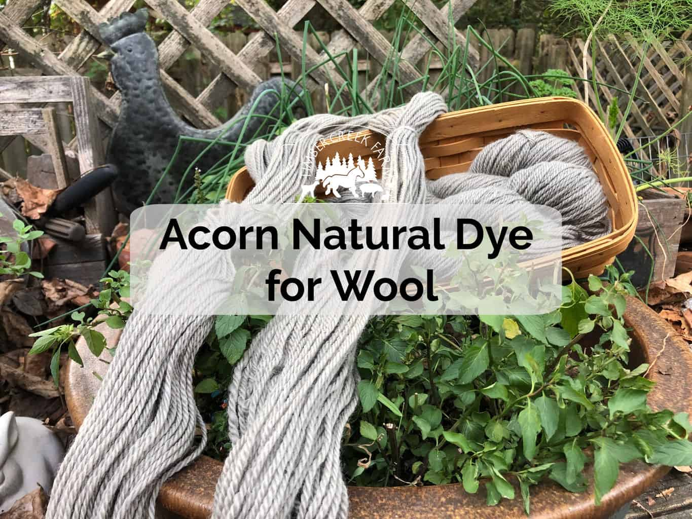 Acorn natural dye for wool