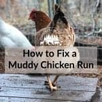 How to Fix a Muddy Chicken Run