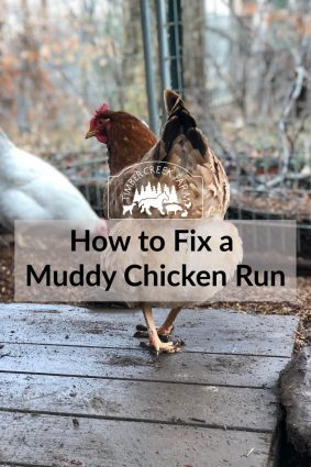 How to fix a muddy chicken run and keep it from occurring again.