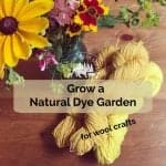 Grow Natural Dyes for Wool Crafts