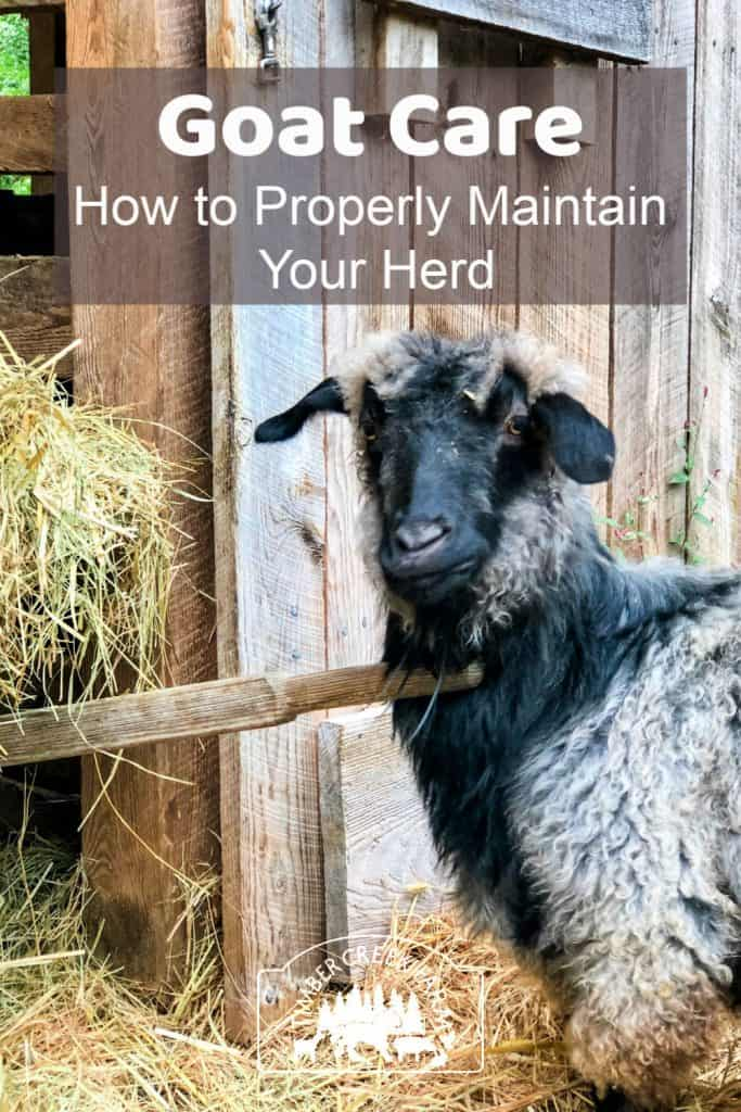 goat care and maintenance