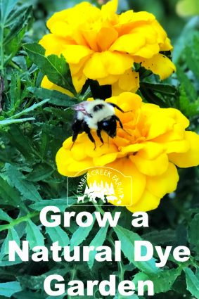 grow natural dyes