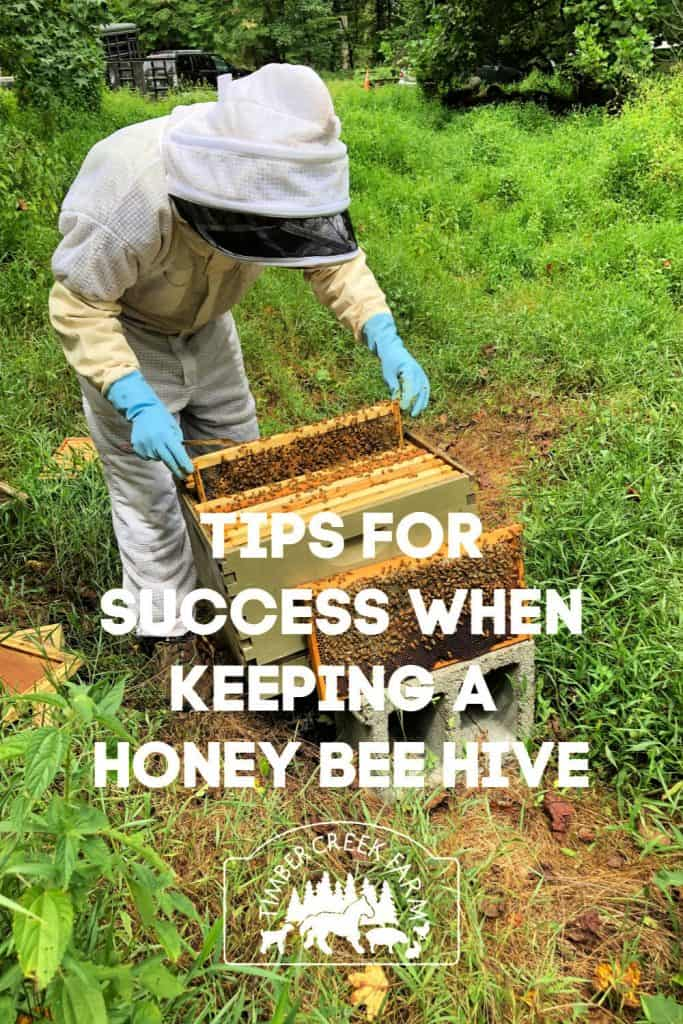 Keeping a honey bee hive